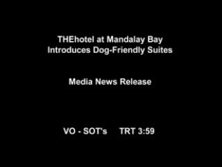 Pampered Pups Can Live It Up in the Lap of Luxury