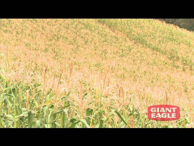 Giant Eagle Celebrates the Upcoming Season for Fresh, Regionally Grown Produce