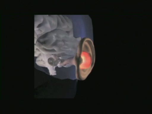 Scientists Collaborate to Speed Cure for Hearing Loss