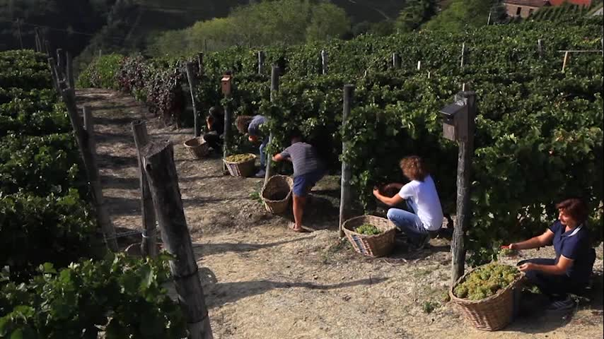 The success of MARTINI Asti sparkling wine centers on innovation and a passion to keep Italian traditions alive. To protect family vineyards, MARTINI established the L'Osservatorio, a center for sustainability, in Italy. It assists growers with sustainable farming practices by hosting sustainability sessions and offering insights on natural ways to manage pests, climate changes and upcoming harvests.
