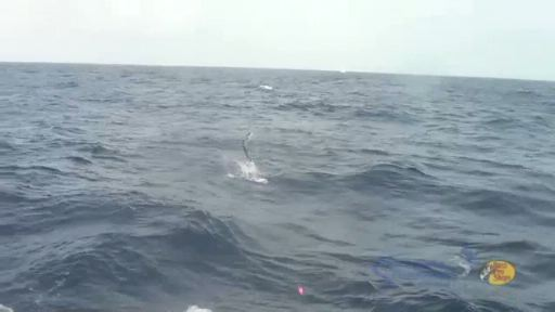 Video clips from the 2013 World Sailfish Championship in Key West, Florida.